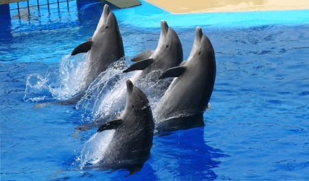 dolphins jumping somewhere in Spain Banco de Imagens