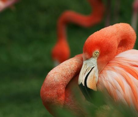 flamingo Stock Photo - 10788997