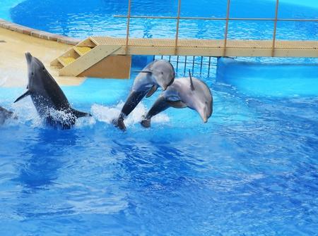 dauphins sautant quelque part en Espagne Banque d'images