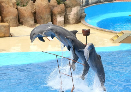 dolphins jumping somewhere in Spain Stock Photo - 10753642