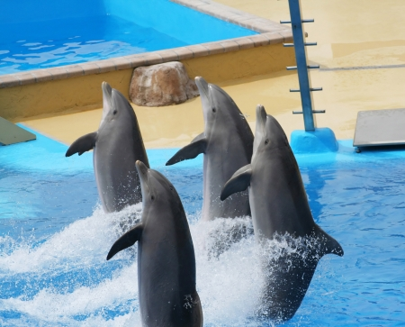 dolphins jumping somewhere in Spain Stock Photo - 10753637