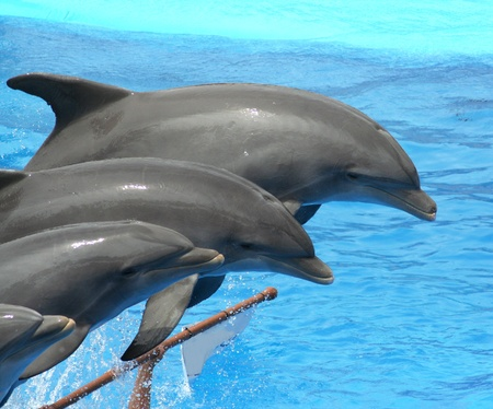dolphins jumping somewhere in Spain Stock Photo - 10753641
