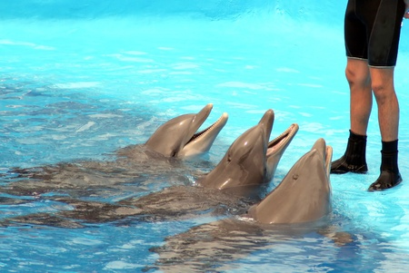 dolphins jumping somewhere in Spain Stock Photo - 10753635