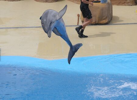 dolphins jumping somewhere in Spain Stock Photo - 10753638