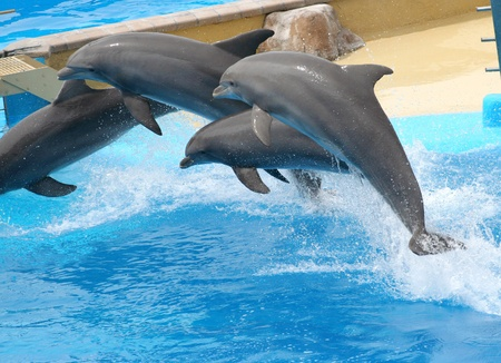 dolphins jumping somewhere in Spain Stock Photo