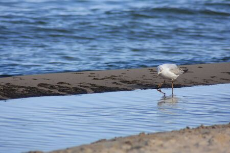 A telephoto of sea gull photo