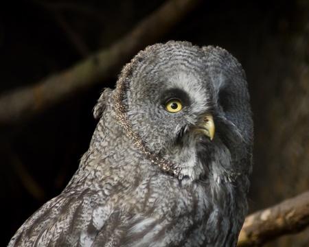 owl resting photo