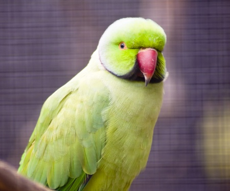 A close up shot of a green parrot Stock Photo - 12534613