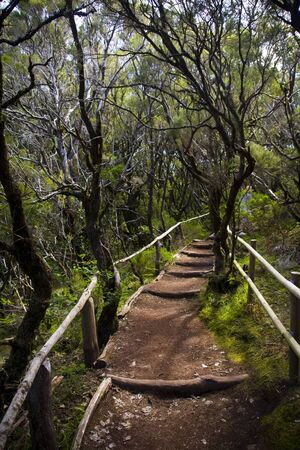the amazing rain-forest in La Gomera, Parque Nacional de Garajonay, Canary islands, Spain photo