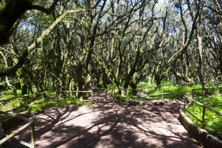 the amazing rain-forest in La Gomera, Parque Nacional de Garajonay, Canary islands, Spain Stock Photo - 13837544