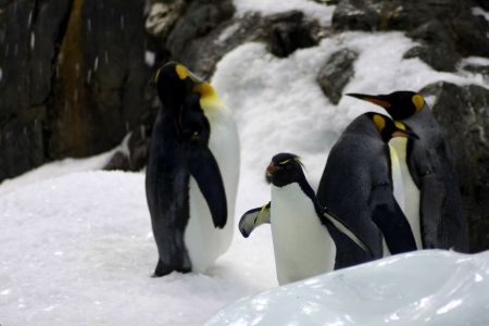 penguins photo
