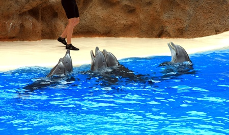 dolphins jumping somewhere in Spain photo