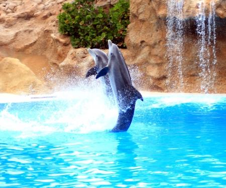 dauphins sautant quelque part en Espagne