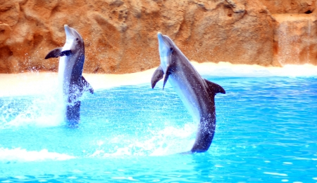 orlando: dolphins jumping somewhere in Spain Stock Photo