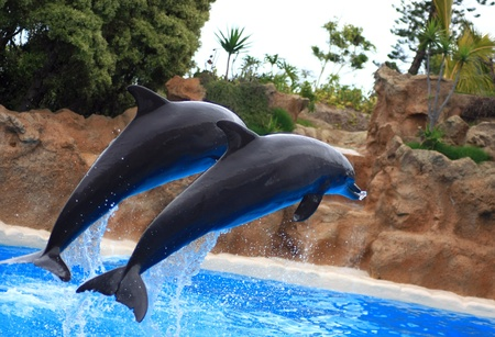 somewhere: dolphins jumping somewhere in Spain Stock Photo