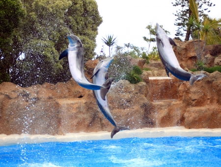 dolphins jumping somewhere in Spain