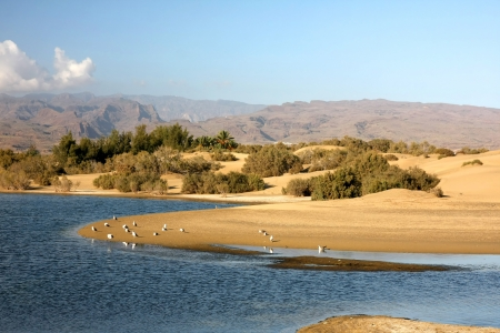 gran canaria: The small, but amazing desert  Dunas de Maspalomas  in Gran Canaria island,Spain with some water, where the birds can rests, and the mountains on background Stock Photo
