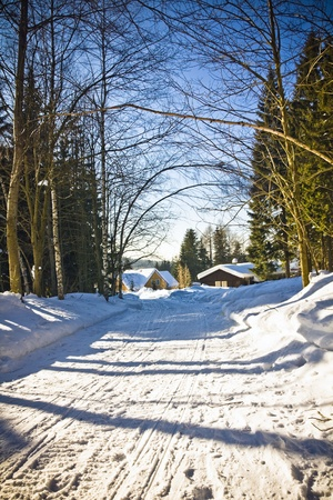 beautiful winter path in sunny day photo