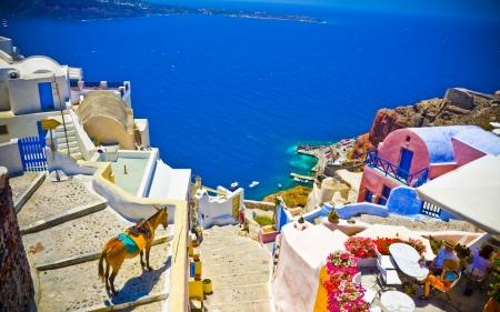 cycladic: la vista sulla citt� di Oia con un asino, Santorini, Grecia