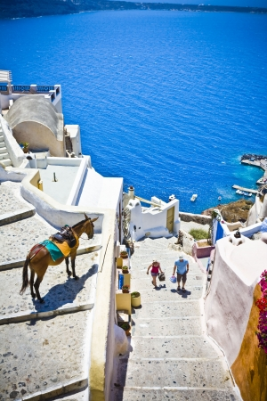 santorini greece: the view on Oia town with a donkey, Santorini, Greece