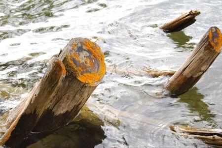 호수에서 그루터기에 주황색 몰드 스톡 콘텐츠 - 30305814
