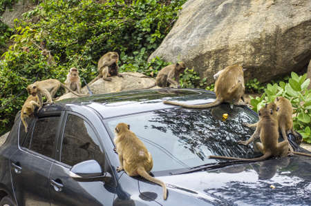 Macaques on a car at Khao Takiab Hua Hin Thailand Stock Photo