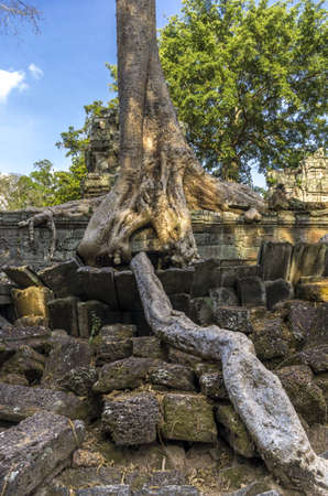 Giant roots of Sprung tree at Ta Prohm temple in Siem Reap Cambodia photo