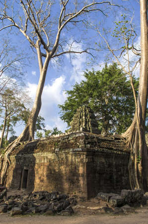 Ta Prohm temple with giant Sprung trees at Angkor in Siem Reap, Cambodia photo