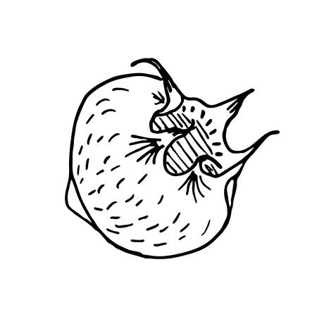 Hand drawing sketch mature ripe mespilus germanica, medlar or common medlar on a white background in isolation. Vector illustration. Apple and with unfolded permanent sepals, hollow appearance