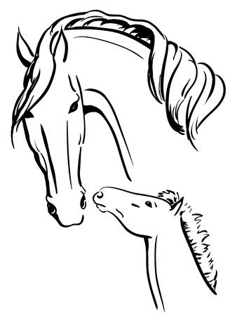 chevaux noir: Jument et le poulain noir et blanc Illustration