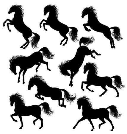 garanhão: Conjunto de um cavalo em movimento silhuetas isoladas no branco