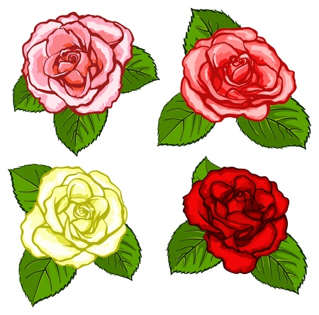 Four different colours roses with leaves isolated on white Ilustração