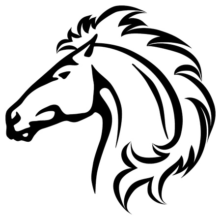 white horse: Vector illustration of a wild horse head