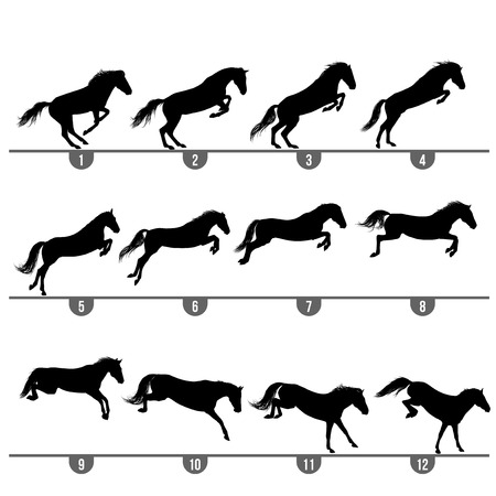 Set of 12 jumping horse phases silhouettes  Vector