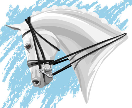 White Dressage Horse head on blue background