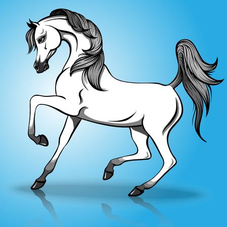 Vector illustration of beautiful arabian horse on a blue background Illustration