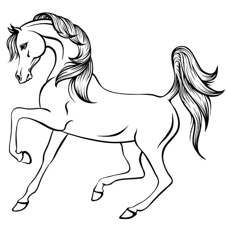 Vector outline illustration of beautiful arabian horse Illustration