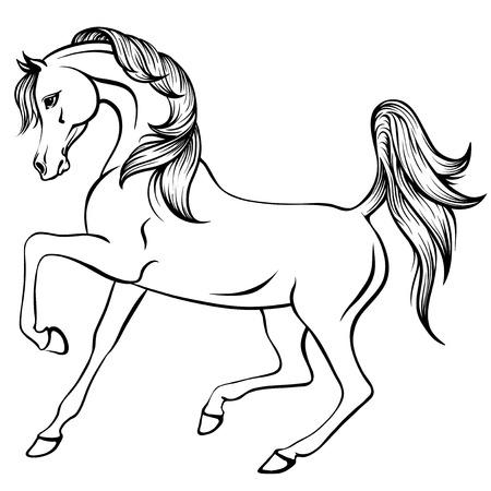 Vector outline illustration of beautiful arabian horse