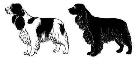 Cocker Spaniel set 2 - outline and silhouette vector Reklamní fotografie