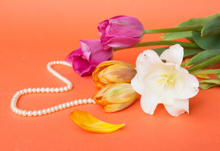 Gift and spring tulips photo