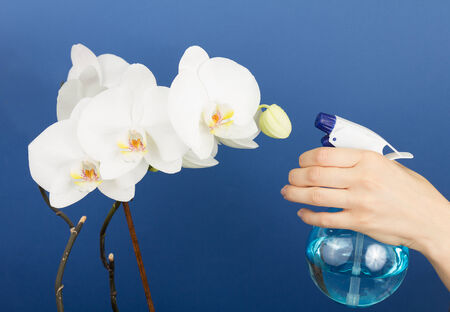 spaying: Woman watering orchids