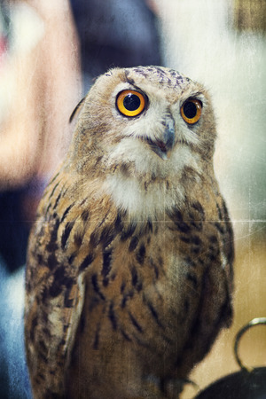 toned: The Owl. Retro toned and textured image