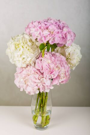 Beautiful hydrangea in a vase