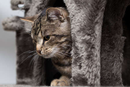 daydream: Tabby cat in hiding