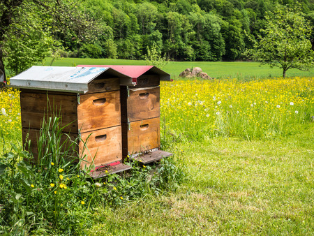 Beehive wooden house on a spring meadow