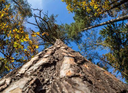 far up treetop