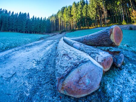 Tree trunks in the Black Forest