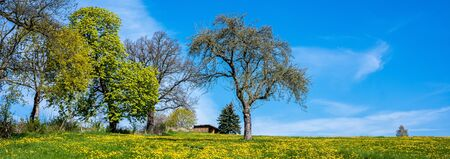 Spring meadow panorama Stockfoto - 130063266