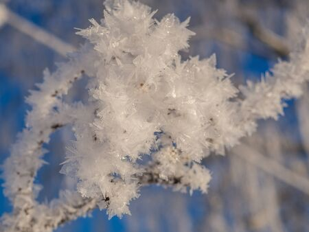 Ice crystals at minus degrees