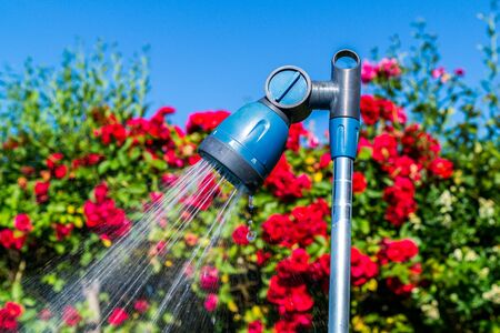 Garden shower with roses. Background